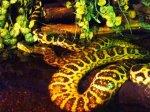 zwierzak w terrarium