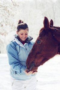 Duży koń